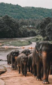 Cheap Car Rentals in Sri Lanka
