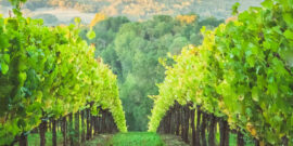 The Best Wine Regions in USA